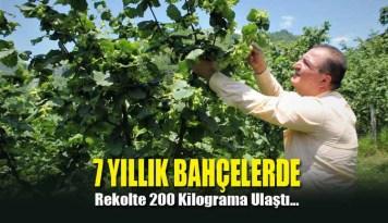 7 yıllık bahçelerde rekolte 200 kilograma ulaştı…