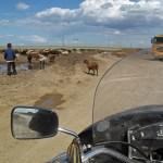 Песък, дете, овце, камион ... и мотор ... асфалт нема ...ФОТО: Коста Атанасов уебсайт (кликнете за по-глями размери)