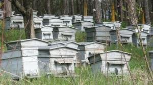 Пчелен кошер се нарича
