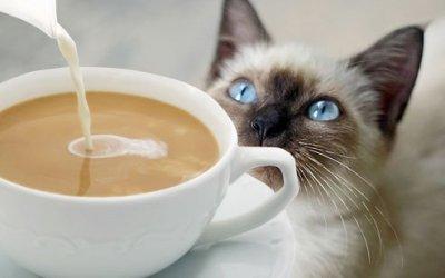 Котешки кафенета по света