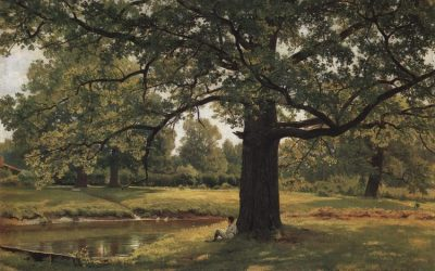 Quercus robur, приятно ми е