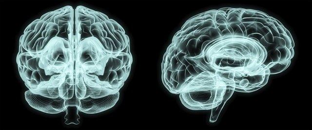 Програмирайте мозъка си и дресирайте нервната система