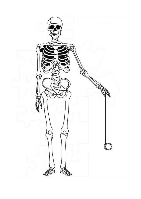 Human Anatomy Skeleton Coloring Pages Bulk Color