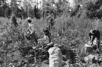 Image result for black sharecropper