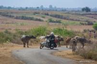 palpur-kuno-road-2440