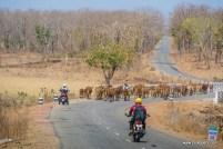 palpur-kuno-road-2542