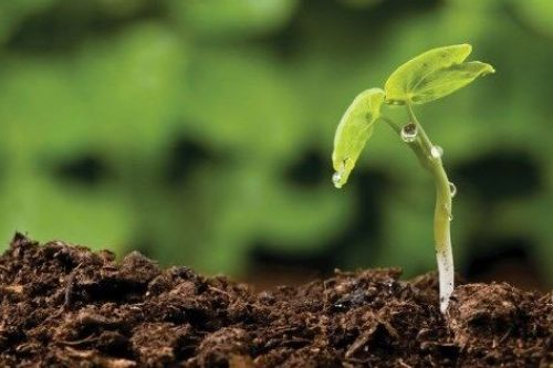 Value Add Agribusiness Investment Attraction Fund