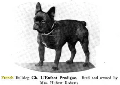 Miniature or Toy Bulldogs and French Bulldogs