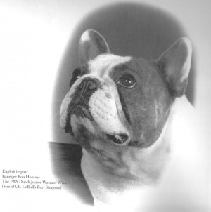 Banerjee Bonhomme - Blue French Bulldog