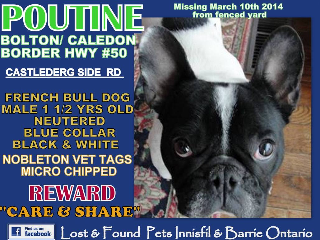 Missing French Bulldog Caledon Bolton Ontario Canada