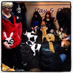 Over 100 people and their French Bulldogs joined us for the Eastern Canada French Bulldog Club Social Meet Up.