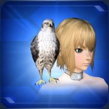 肩乗り白鷹 Perched White Falcon