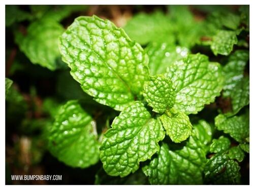 pudina recipes mint leaves