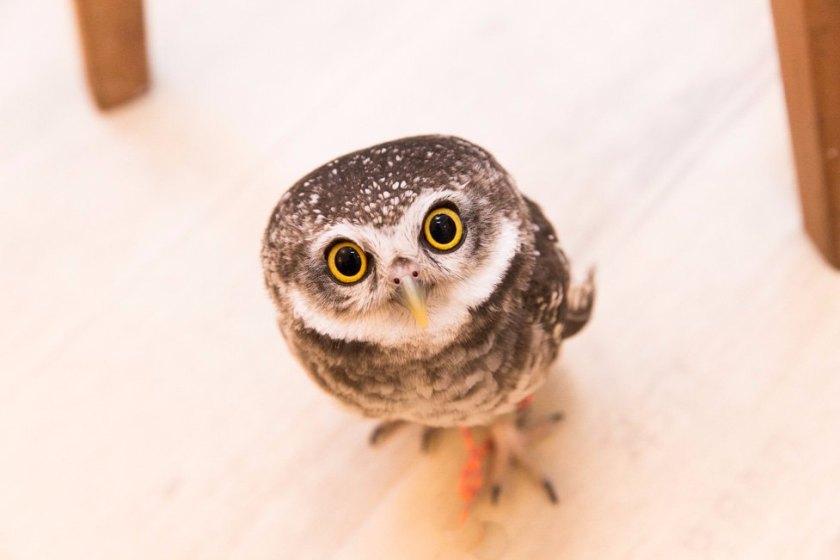 """Die 10 verrücktesten """"Attraktionen"""" auf Tripadvisor owl cafe eulen café eule tokio tokyo"""