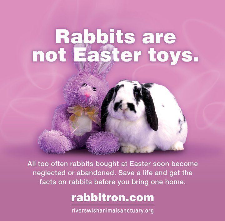 Image result for don't buy bunnies for easter