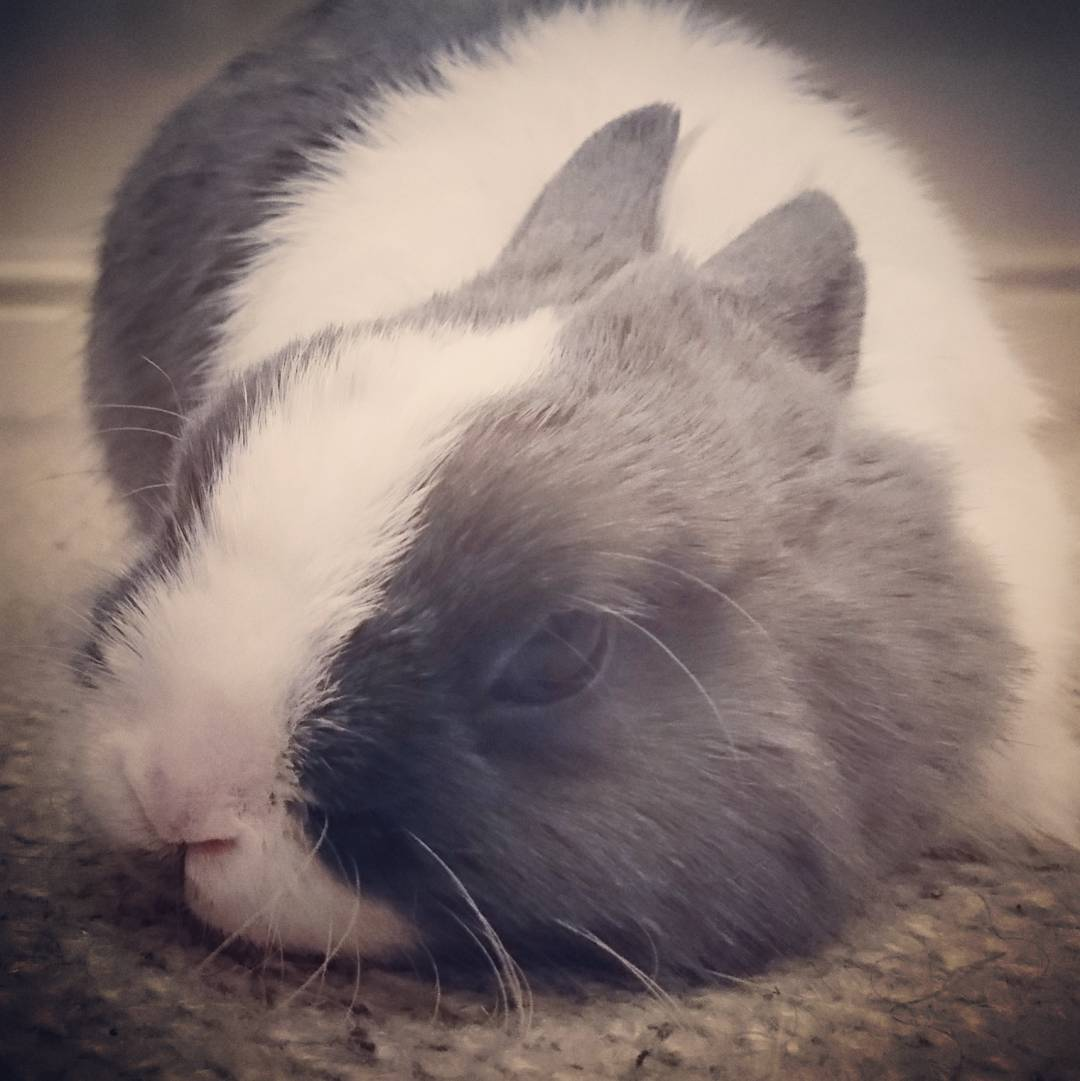 Rabbit Diet: How to keep your pet bunny healthy - The ...