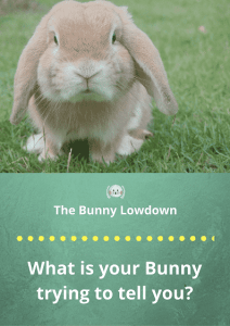 Rabbit Behaviour: What is your bunny trying to tell you?