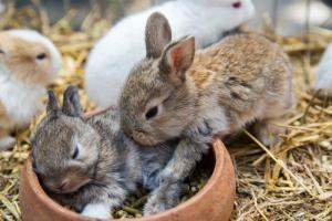 Baby Rabbits Feeding | The Ultimate Baby Rabbit Guide
