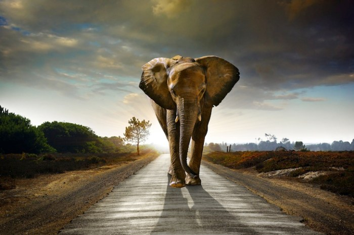 African-Elephant-on-the-Road