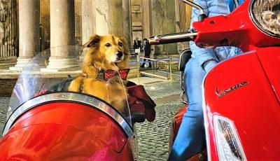 TripForDog.com: cinque incredibili esperienze da fare con il vostro cane almeno una volta nella vita