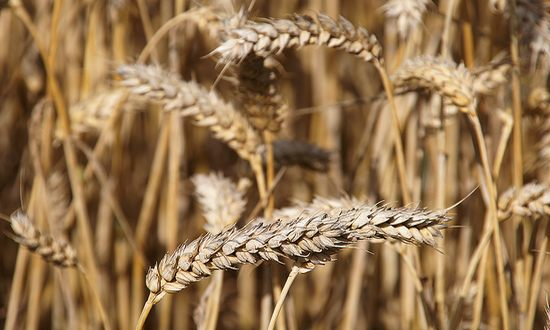 agricoltura(freefoto_7589951894@flickr_CC)
