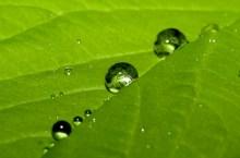 green-economy(thundafunda wallpapers)