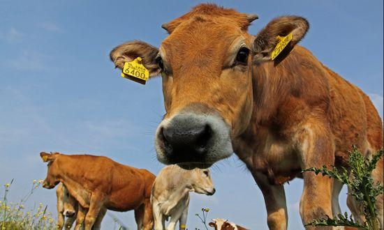 mucche-latte-allevamento-agricol_(Dirk-Jan Kraan 5233346697 CC-BY-NC)