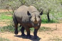 rinocer-animal_(ronporter-412667)