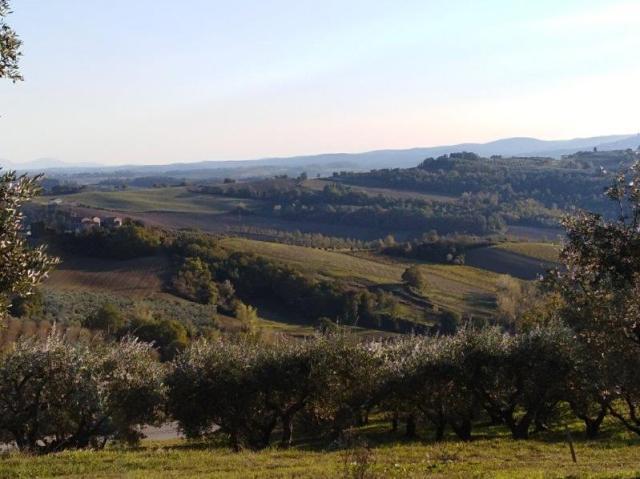 Jak se vyrábí olivový olej