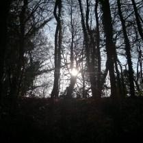 un'ora nel bosco