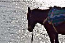 Alicudi mulo davanti al mare