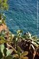 Fichi d'India a strapiombo sul mare di Alicudi