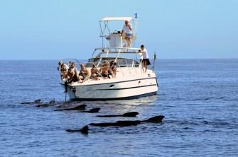 I Luoghi del Cuore Fai - Pelagos, Santuario internazionale per i cetacei del Mediterraneo