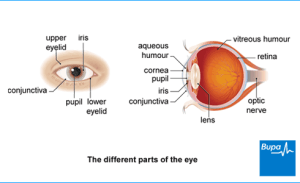 Conjunctivitis – the facts | Health Information | Bupa UK