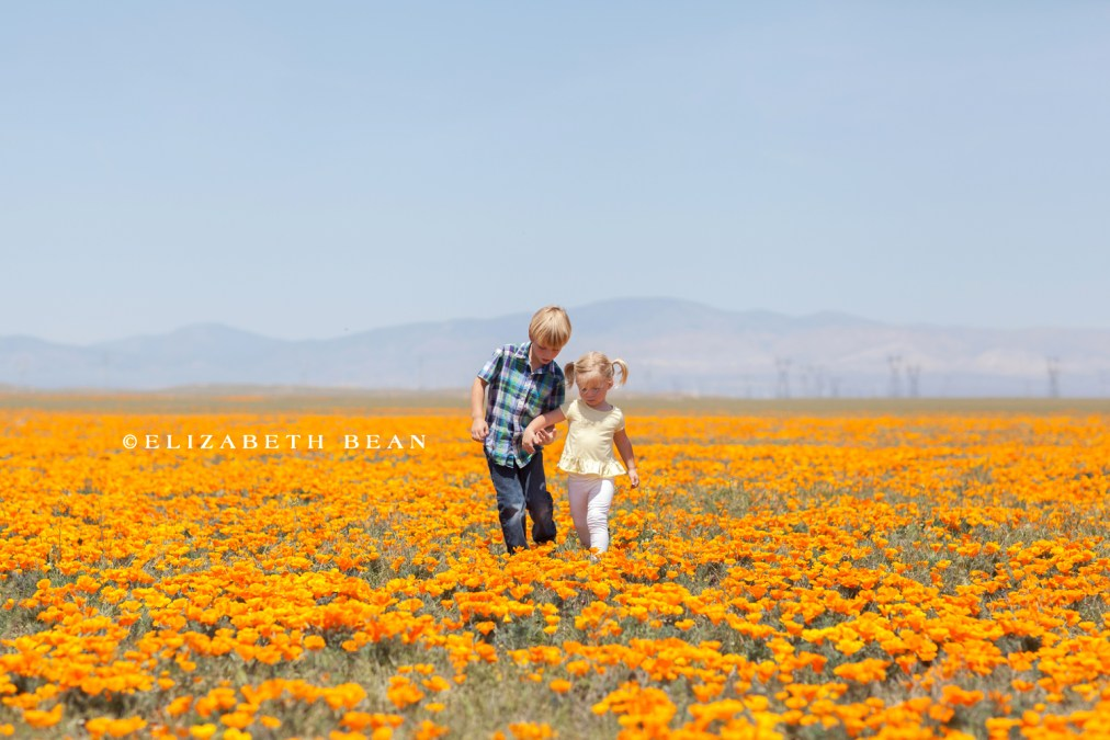 042014 poppy fields 54