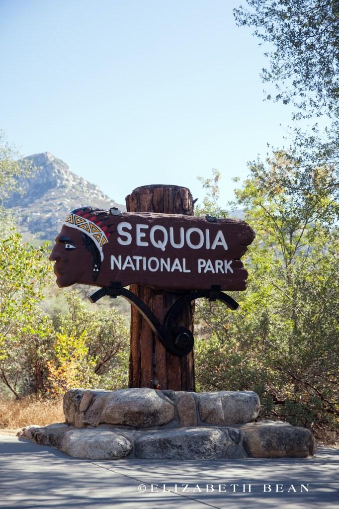 070114 Sequoia 02
