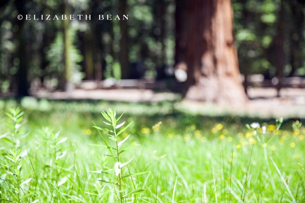 070114 Sequoia 23