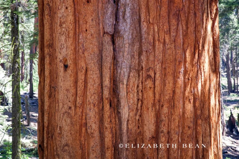 070214 Sequoia 28