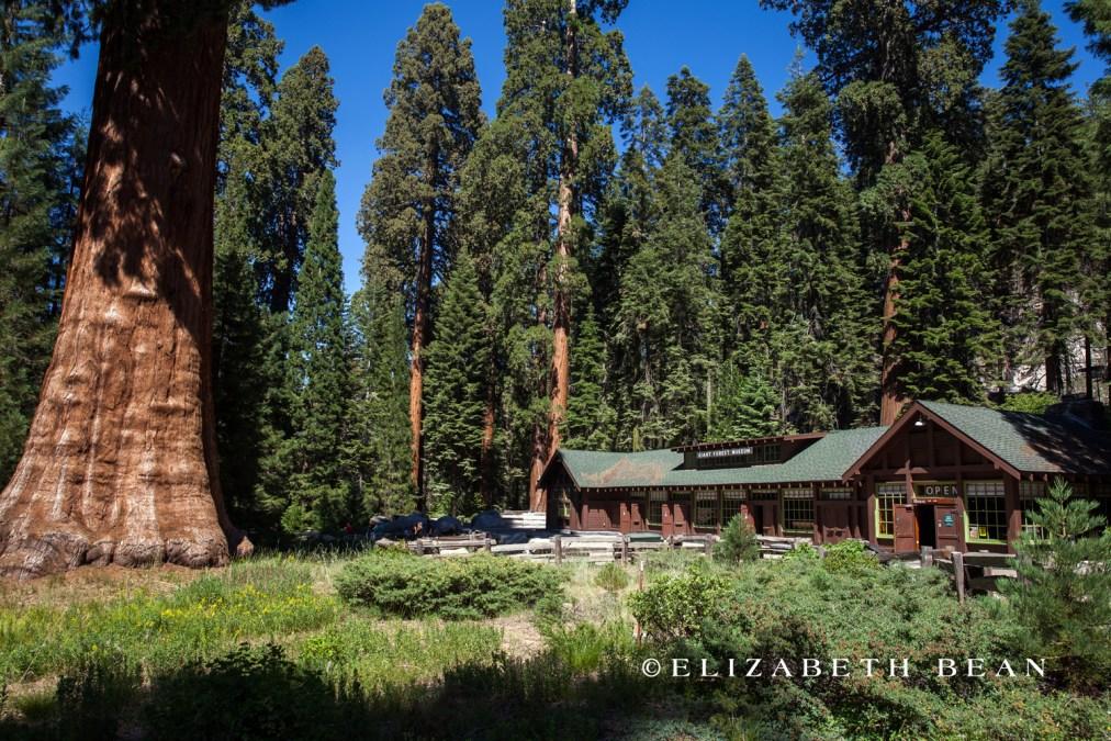070214 Sequoia 74