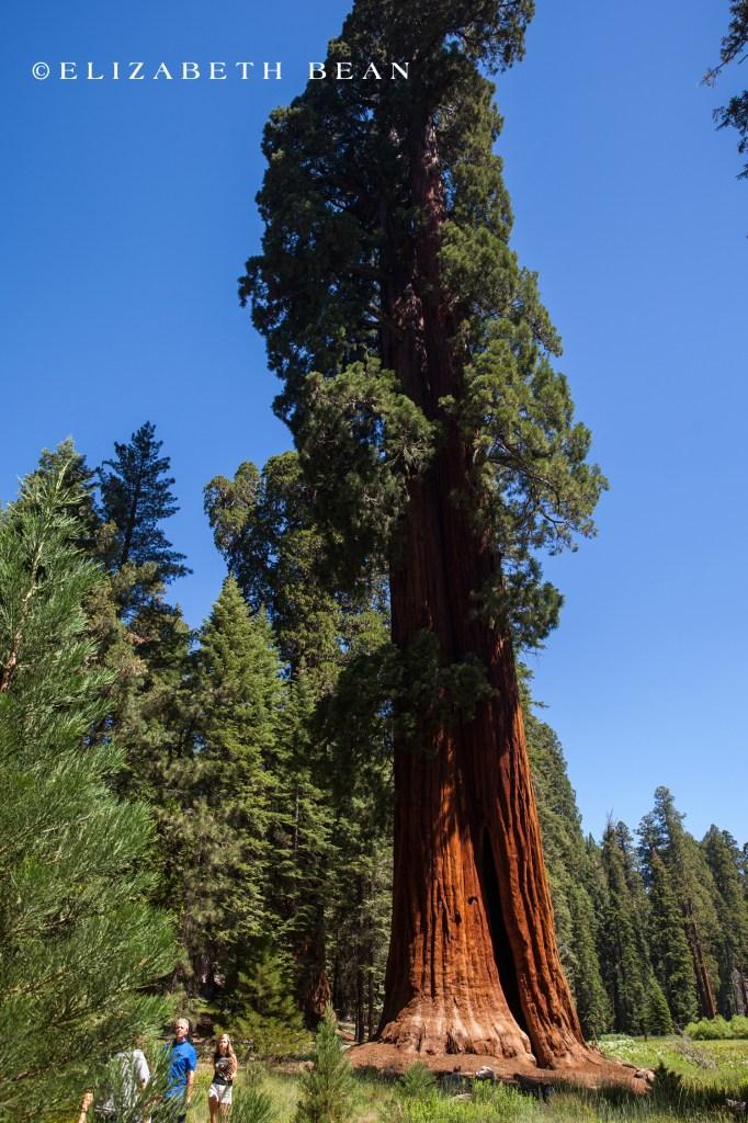 070314 Sequoia 11