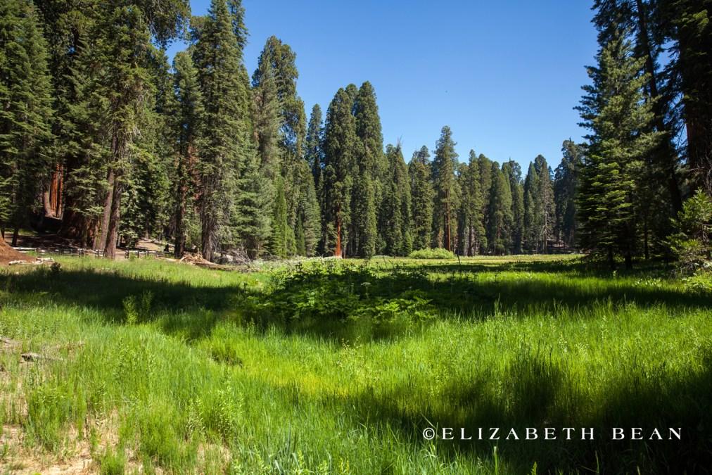 070314 Sequoia 13