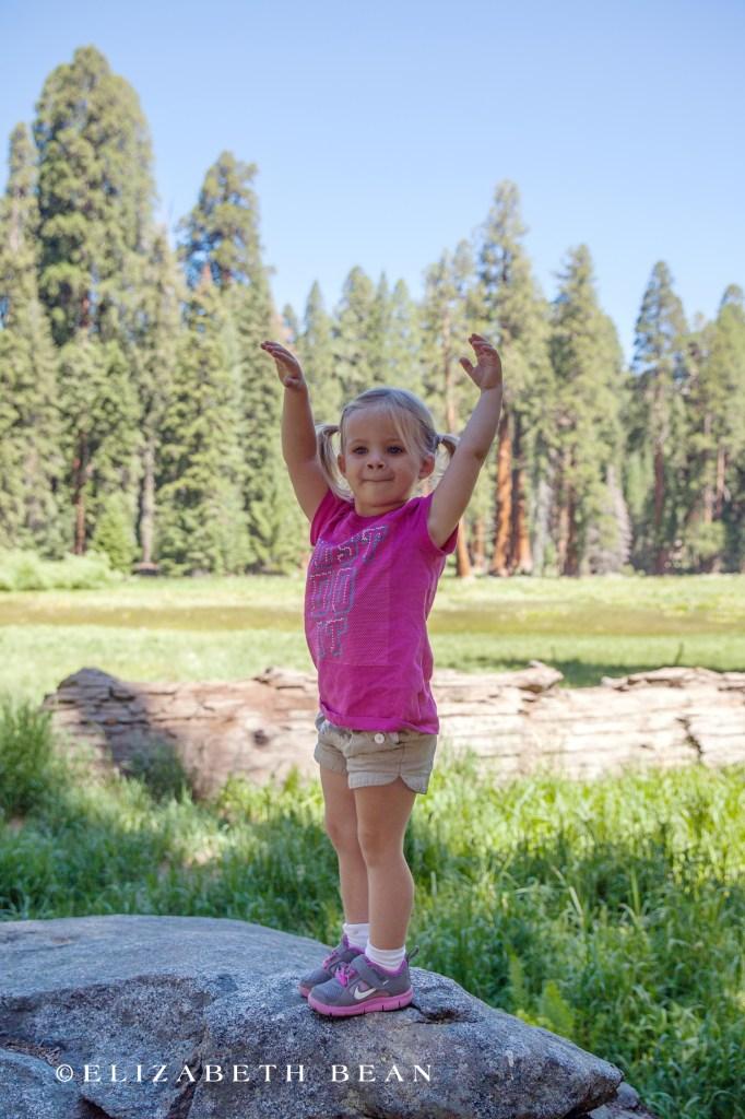 070314 Sequoia 17
