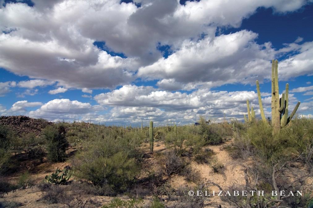 Saguaro National Park ~ Tucson, Arizona