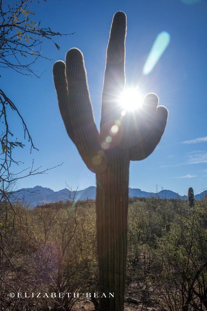 010615 Tucson 28