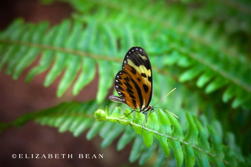 030809 Butterfly 42