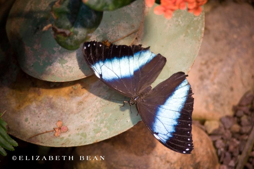 030809 Butterfly 54