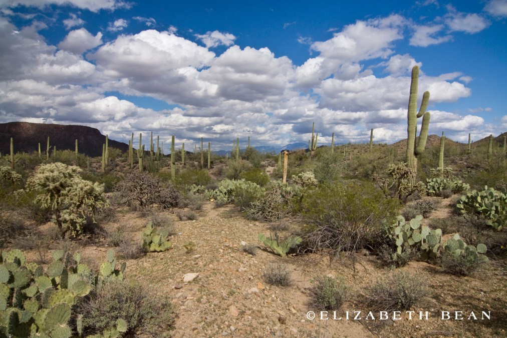 Saguaro National Park ~ Tucson, Arizona