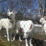Bear, Tink & Isi