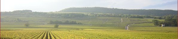 the vineyards of puligny-montrachet
