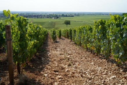 Left Demoiselles, right Vin de France - look at the stony difference...